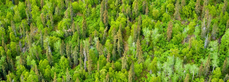 Northern China to get a 'forest city'