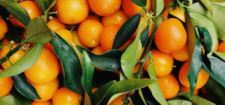SA bumper harvest finds willing Chinese markets