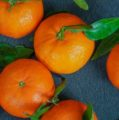 South African citrus debuts in growing Chinese market